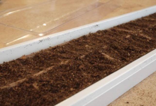 Plante un jardín de hierba de Windowsill y deje el sol brillar adentro | ApartamentoGuide.com